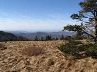 Roan Mountain in March